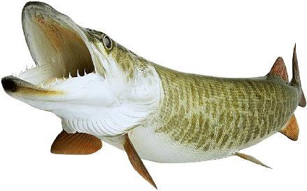 Télécharger la pêche pour liPhone